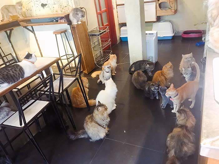 Bastet's Home Coffee - Quán cafe mèo ở Hà Nội