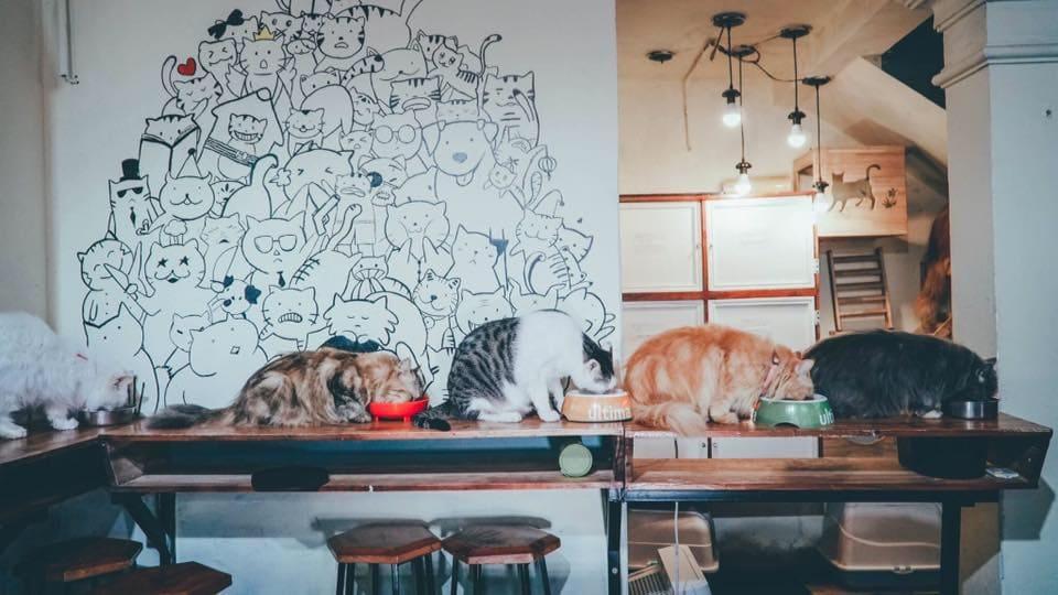cafe mèo hà nội