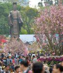 Lễ hội hoa anh đào Hà Nội